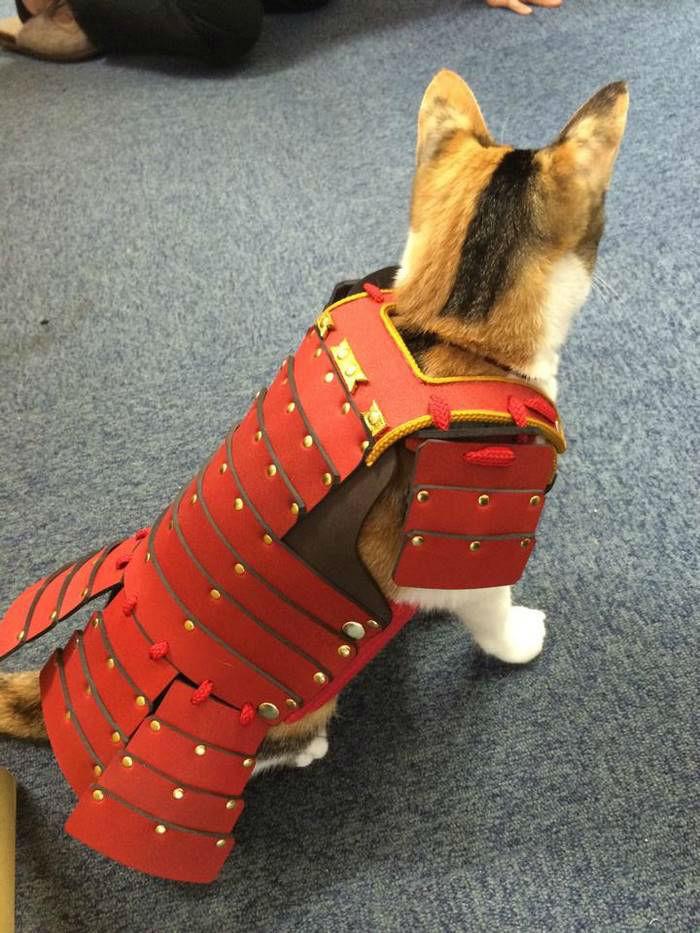 pet-dog-cat-armor-samurai-age-japan-4-w700