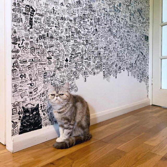 گربه کنار دیوار
