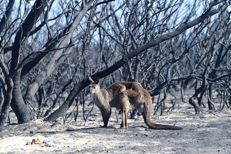 آتش سوزی استرالیا5