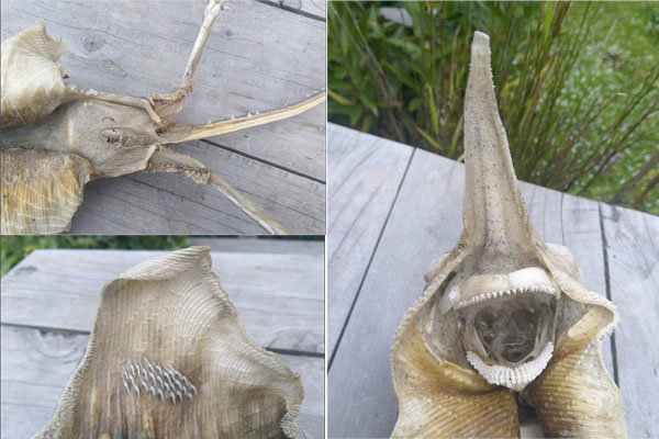 کشف موجود عجیب در نیوزلند