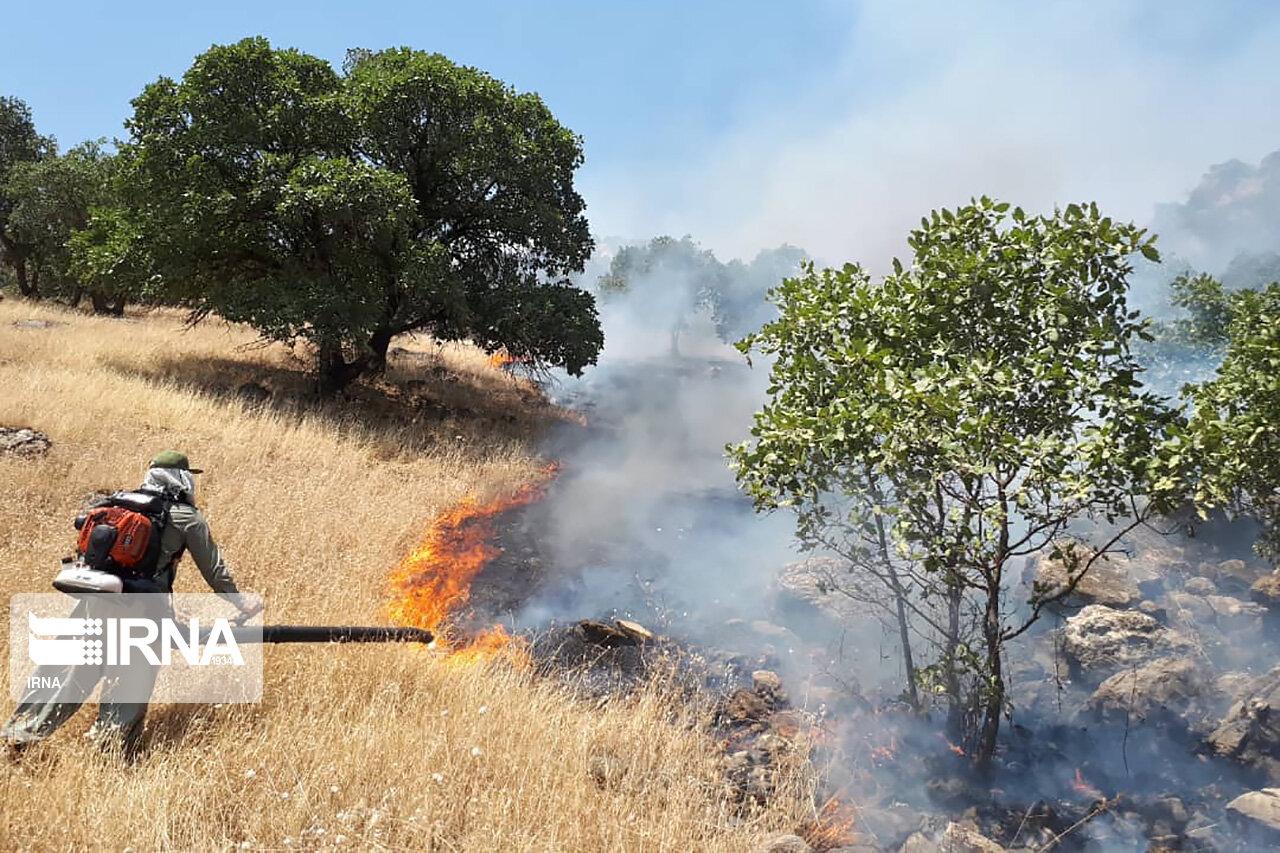 آتش سوزی جنگل های کرمانشاه