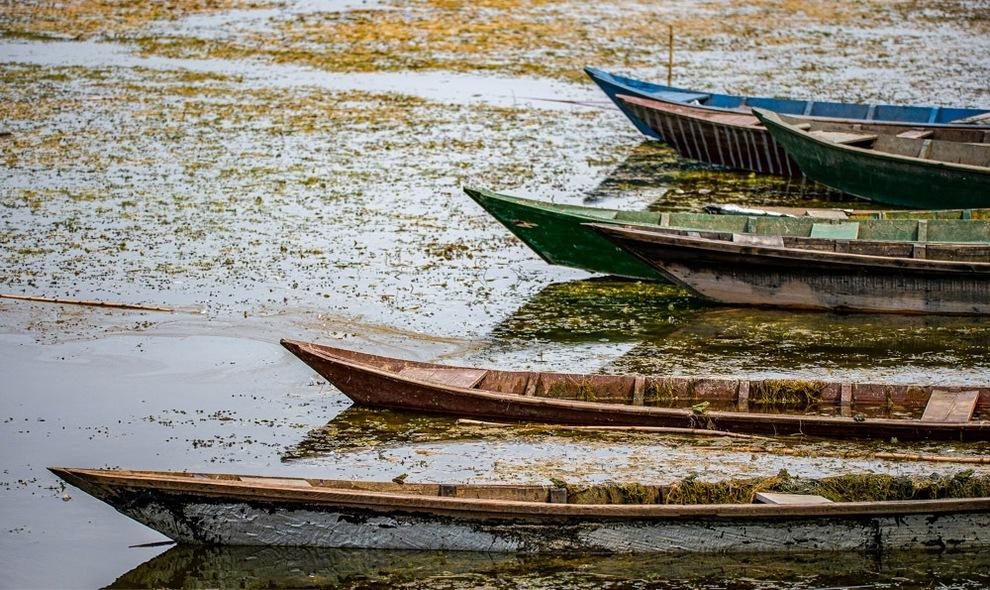 قایق در بین نیلوفر آبی