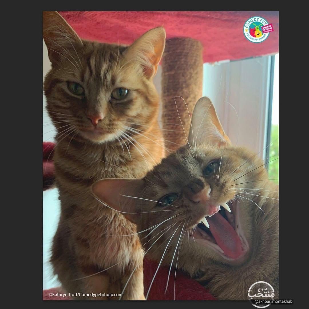 2 گربه