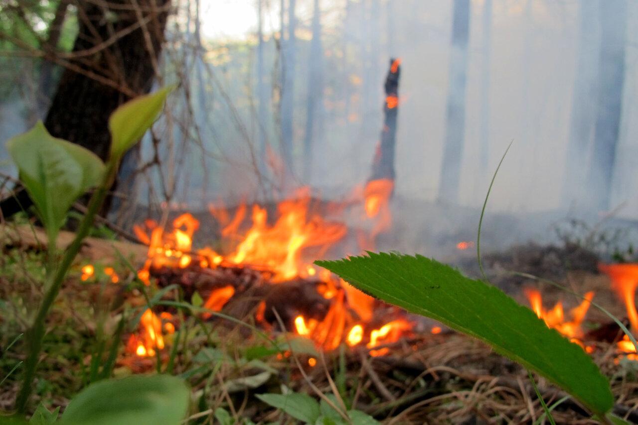 آتش سوزی در رضوانشهر