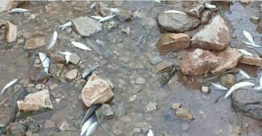 مرگ ماهی های رودخانه خرم آباد