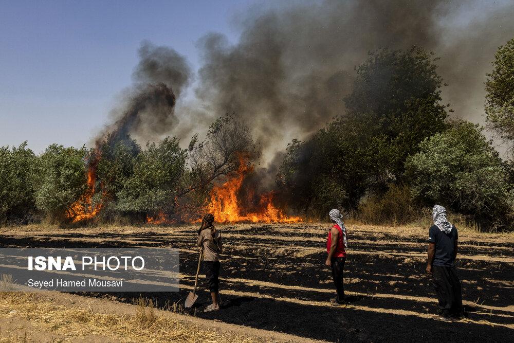 آتش سوزی جنگل های شوش