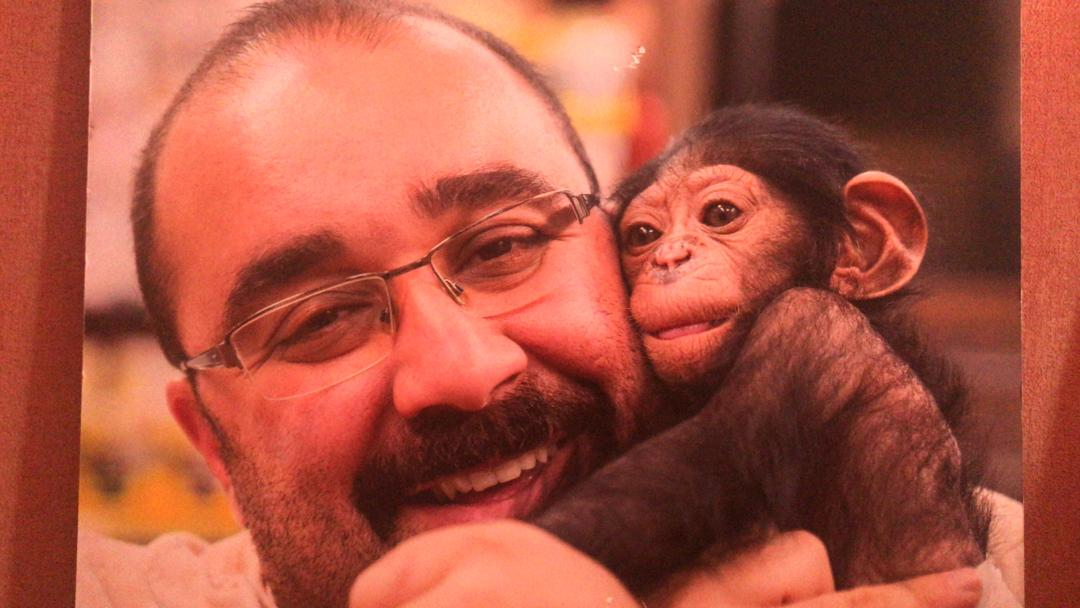 شامپانزه و دامپزشک