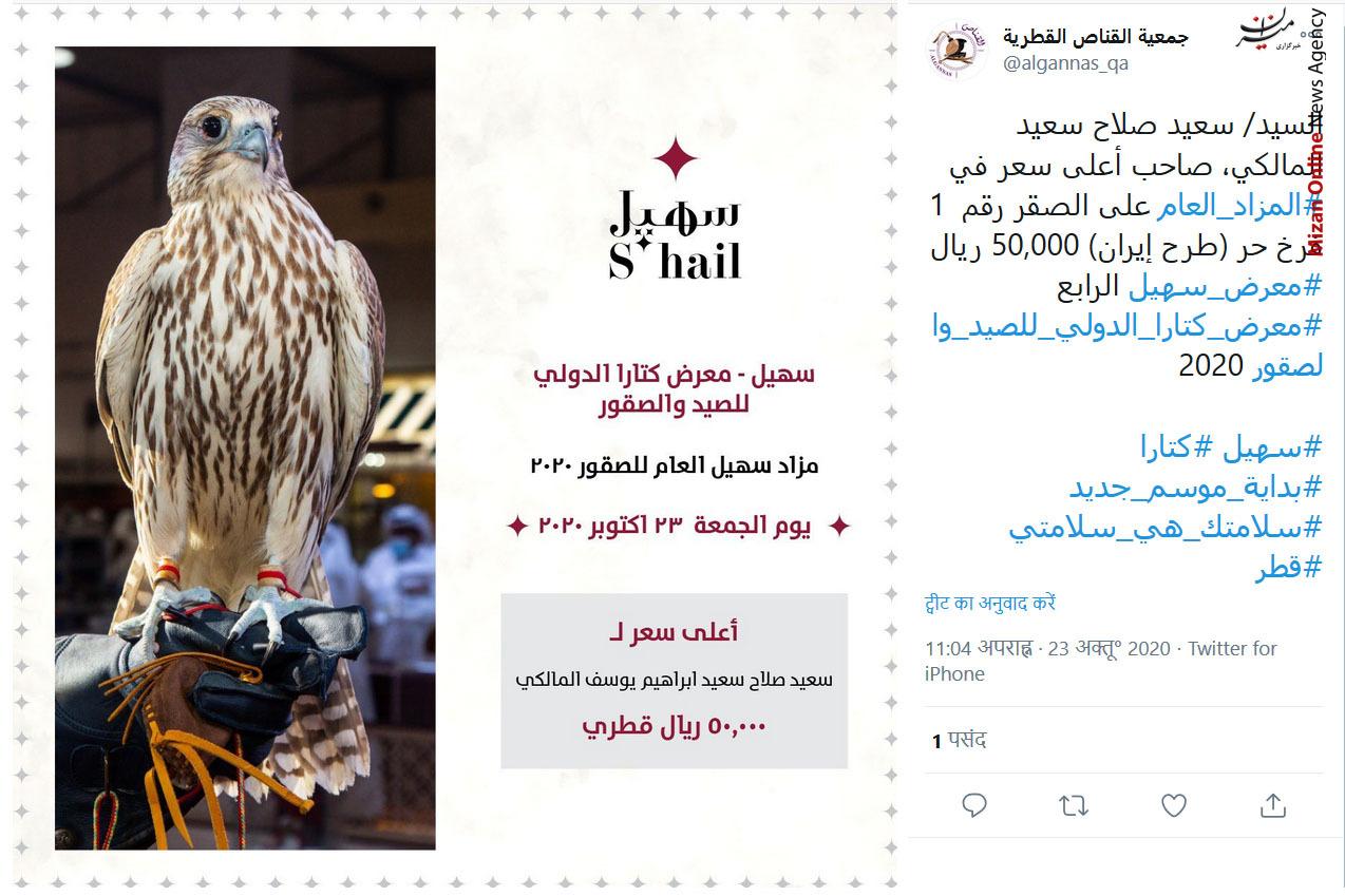 مزایده در پرندگان در قطر