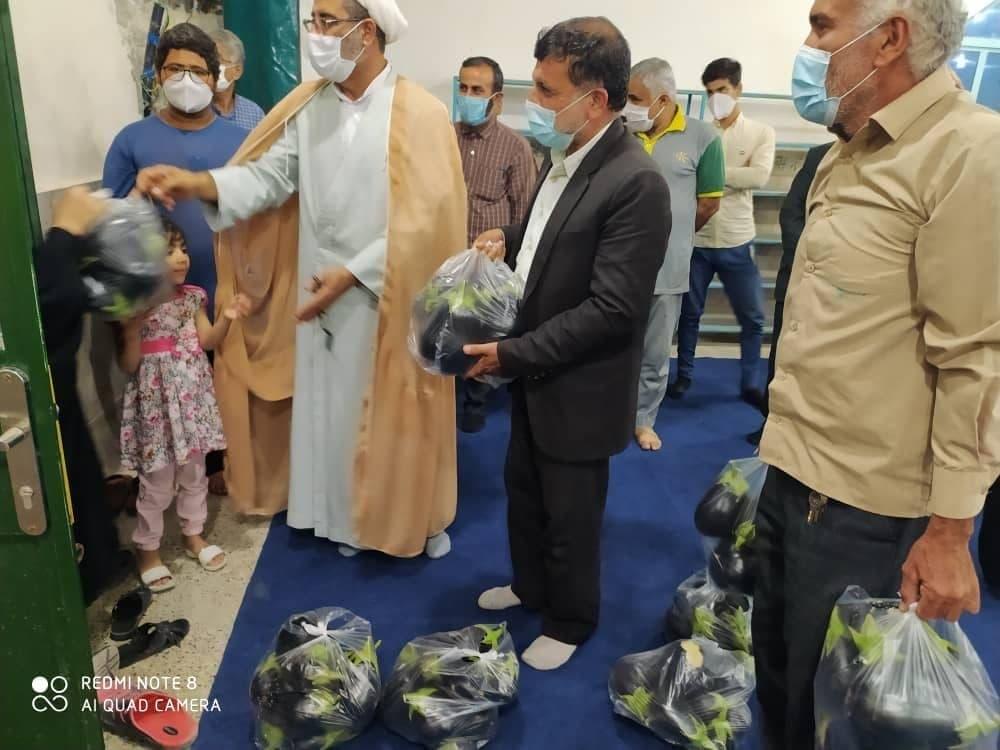 بادمجان حمایتی به مردم تحویل داده شد