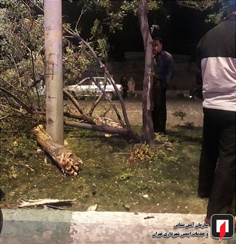 تصادف سواری با درخت1