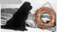 سگهای نجات یافته از حادثه غرق شدن تایتانیک + عکس