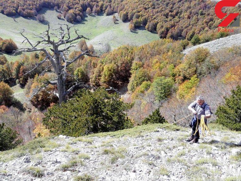 مبارزه پیرترین درخت جهان با تغییرات اقلیمی+عکس