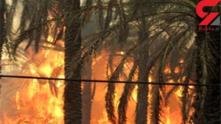 تلاش برای مهار آتشسوزی نخلستانهای سیاهو ادامه دارد