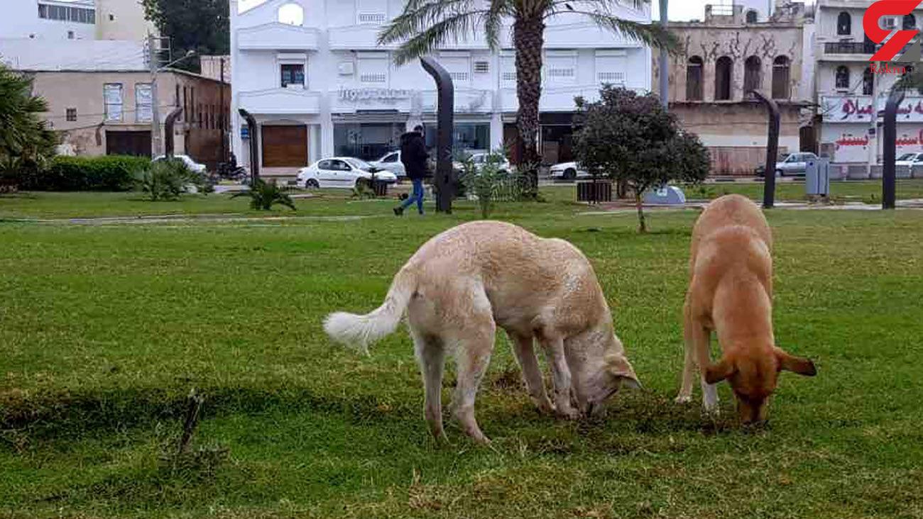 دستورالعمل زندهگیری سگهای ولگرد در شاهین شهر کارآمد نیست
