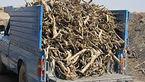 انهدام باند قاچاق چوب تاغ در آران و بیدگل/۳ نفر دستگیر شدند