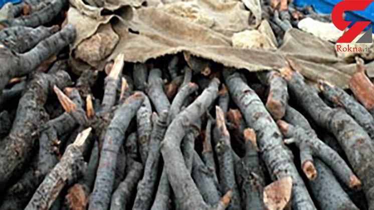 حمله قاچاقچیان چوب به خودروی جنگلبان بهشهری