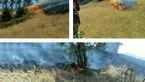 آتش سوزی های سریالی در جنگل های ایلام