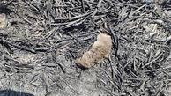 9 عکس از صحنه جزغاله شدن پرندگان در آتش سوزی تالاب گروس