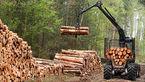 کشف 10 تن چوب قاچاق در شهرستان ابهر