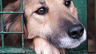 تدوین آییننامه اجرایی طرح منع حیوانآزاری تا ۶ ماه آینده