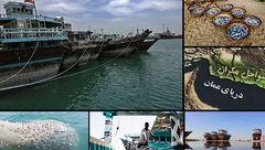 جزئیاتی از صیادی چینیها در دریای عمان/صید در چابهار تخلیه میشود