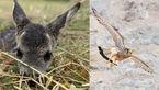 تصاویر دیدنی و شگفت انگیز از عکس های منتخب حیات وحش در این هفته