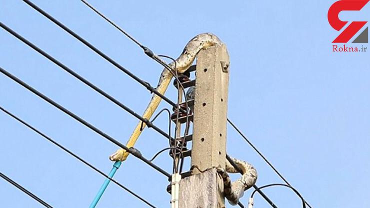 گیر کردن مار ۳ متری بالای تیر چراغ برق + تصاویر