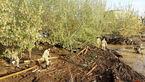 خسارت ۲۰ میلیارد ریالی تگرگ به باغ های ملکان