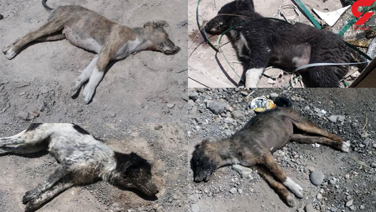 سگ کشی بی رحمانه با سم در تبریز + عکس های تکاندهنده