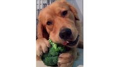 این سگ عشق سبزیجات است!+عکس