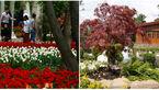 باغ های دیدنی تهران را بشناسید |+عکس های دیدنی