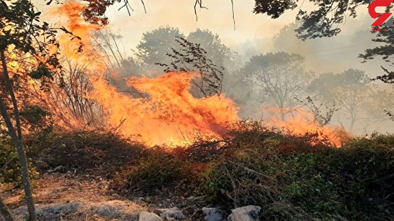 حضور رئیس سازمان جنگل ها در کردکوی / مهار 80 درصدی آتش سوزی جنگل های گلستان