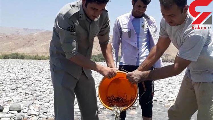۵۰۰۰ قطعه ماهی با انتقال به رودخانه سیمره لرستان نجات یافتند