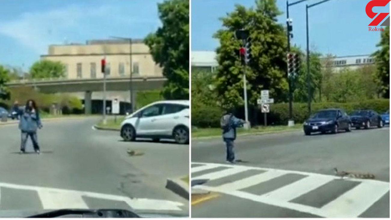 این مرد پلیس راهنمای اردک و جوجه هایش شد + فیلم