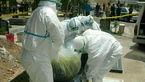 جسد فرد تب کنگویی چه بلایی سر آدم می آورد؟ + عکس