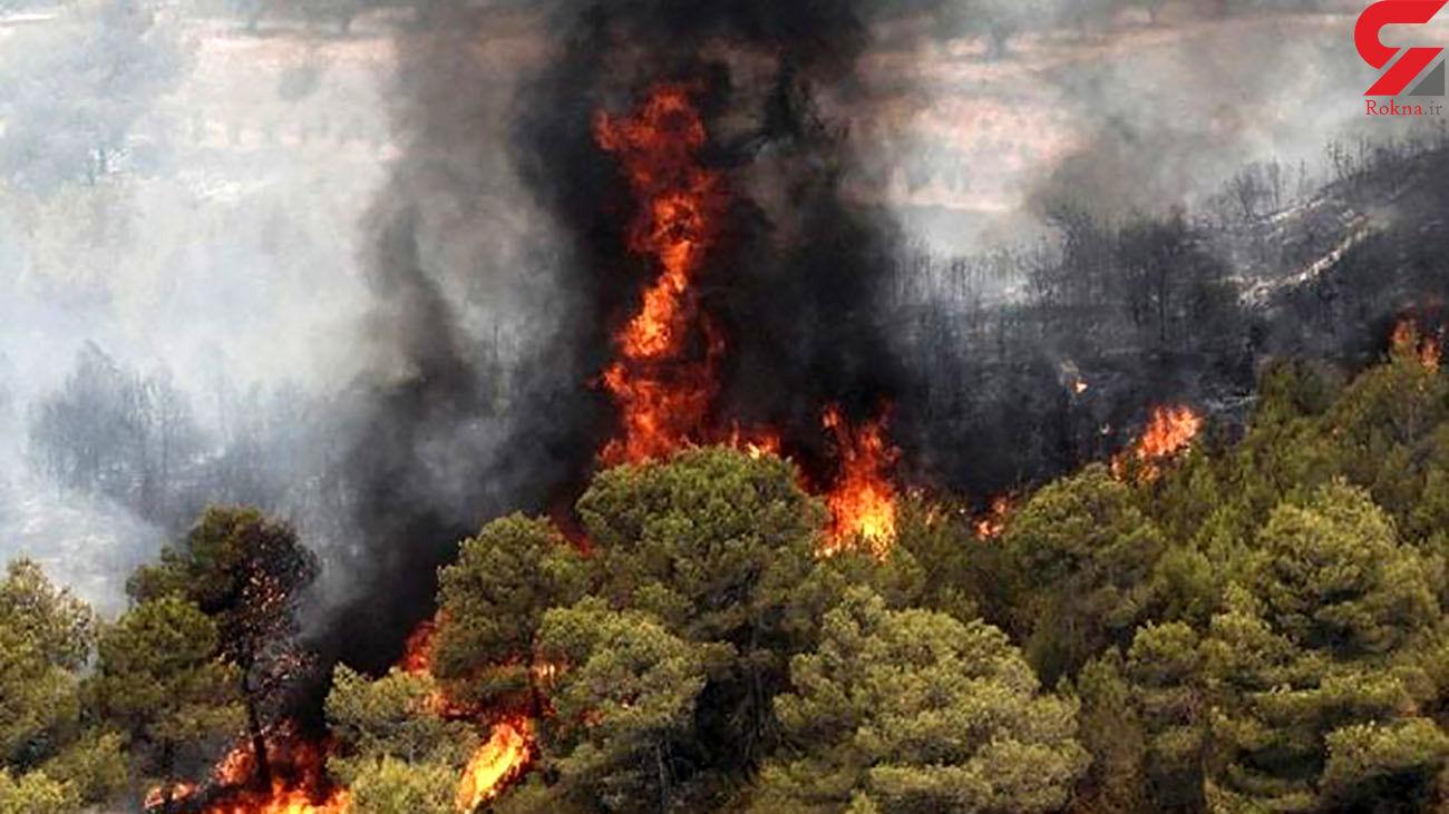بازداشت 2 نفر به خاطرآتش سوزی جنگلهای کهگیلویه و بویراحمد