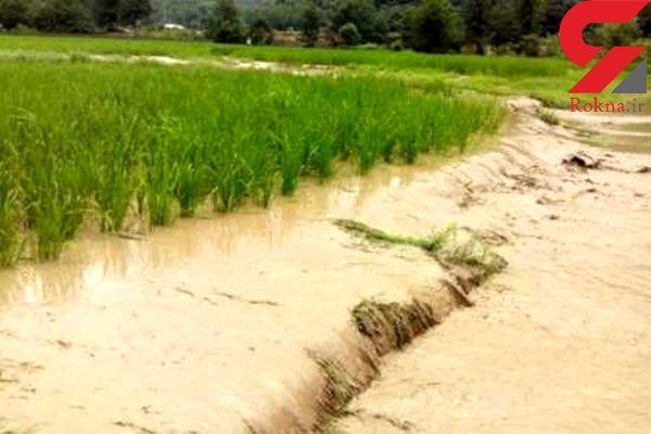 خسارت 50 میلیاردریالی سیلاب اخیر به کشاورزی نکا