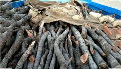 کشف ۶ تن چوب قاچاق در رامسر