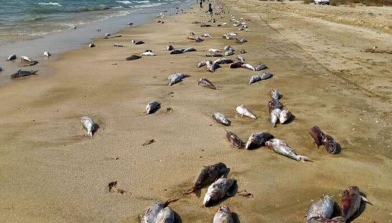 مرگ  15 تن گربه ماهی  در ساحل جاسک /برای دومین بار در فروردین ماه