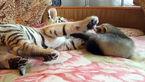 انتشار فیلم دوستی حیوانات هزاران نفر را به باغ وحش کشاند +فیلم و تصاویر