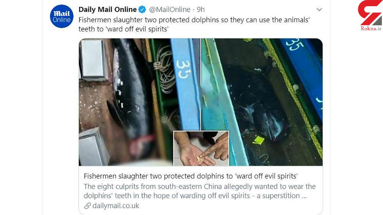 سلاخی وحشتناک دو دلفین برای رهایی از ارواح شیطانی + عکس