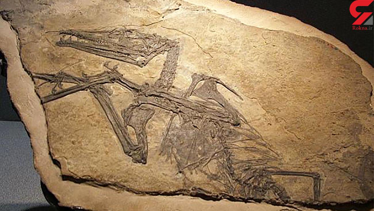 کشف فسیل «اژدهای پرنده»