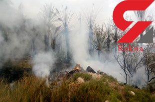 آتش سوزی گسترده در باغات شهرستان جم/ آتش هنوز مهار نشده است