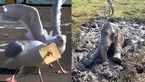 تصاویر جالب از حیوانات گرفتار در دامهای متفاوت