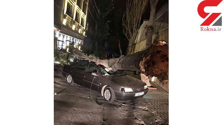 سقوط درخت عظیم الجثه بر روی پژو+ عکس