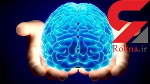 پرورش مغزهای کوچک توسط دانشمندان
