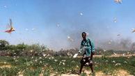 ملخ ها به مزارع کنیا هجوم بردند