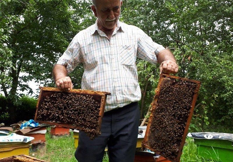 زنبورها این مرد را نیش نمیزنند + فیلم