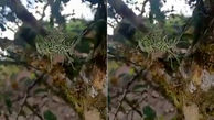 فیلم عجیب از حرکت کردن جانور عجیب الخلقه در هندوستان + فیلم