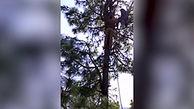 زنی که  از ترس پلنگ بالای درخت رفته بود بلای دیگری بر سرش آمد+فیلم